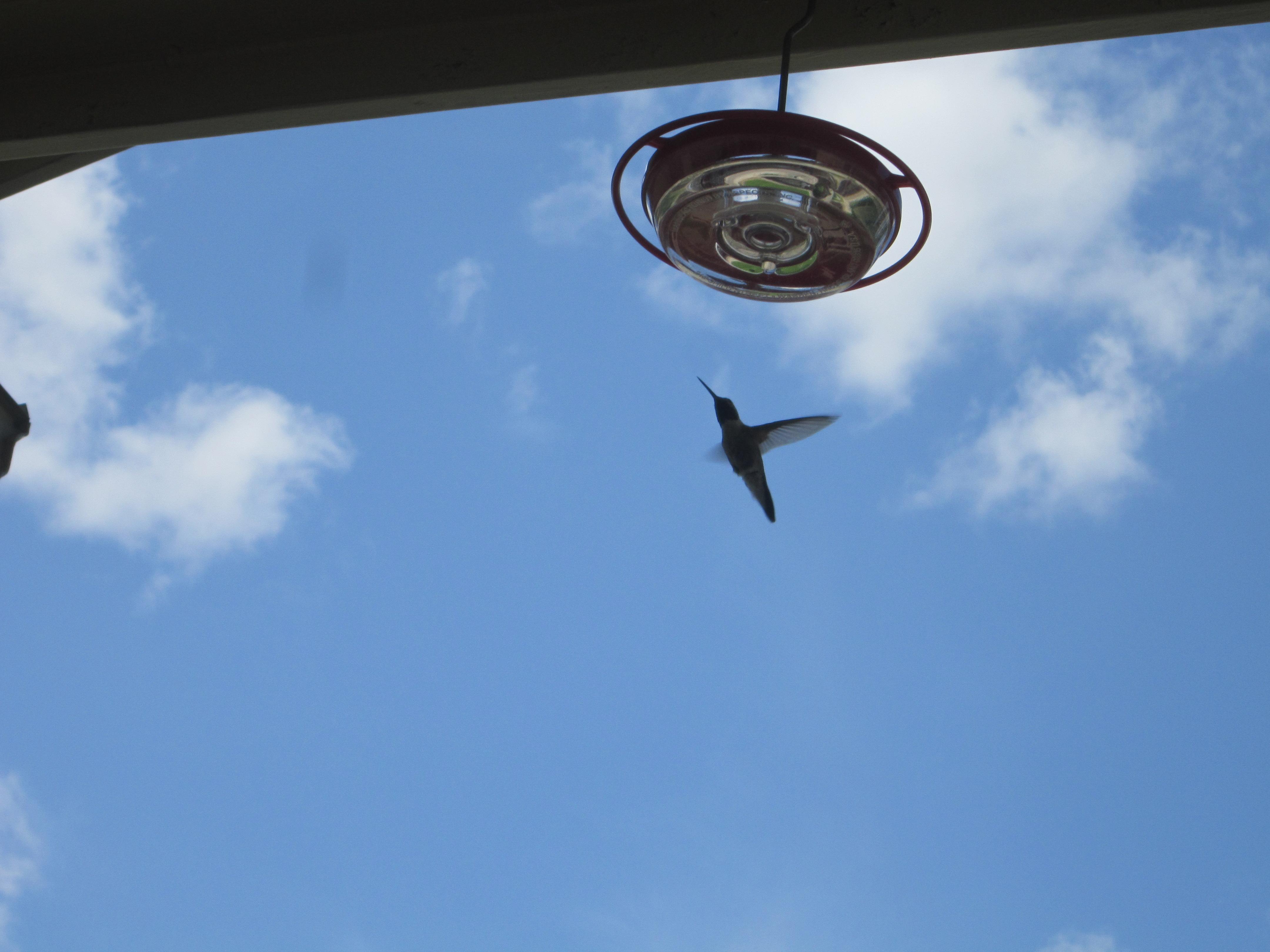 The Hummingbird – An Advent Reflection