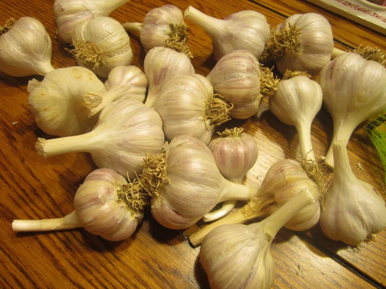 How Garlic Taught Me about Death and Resurrection