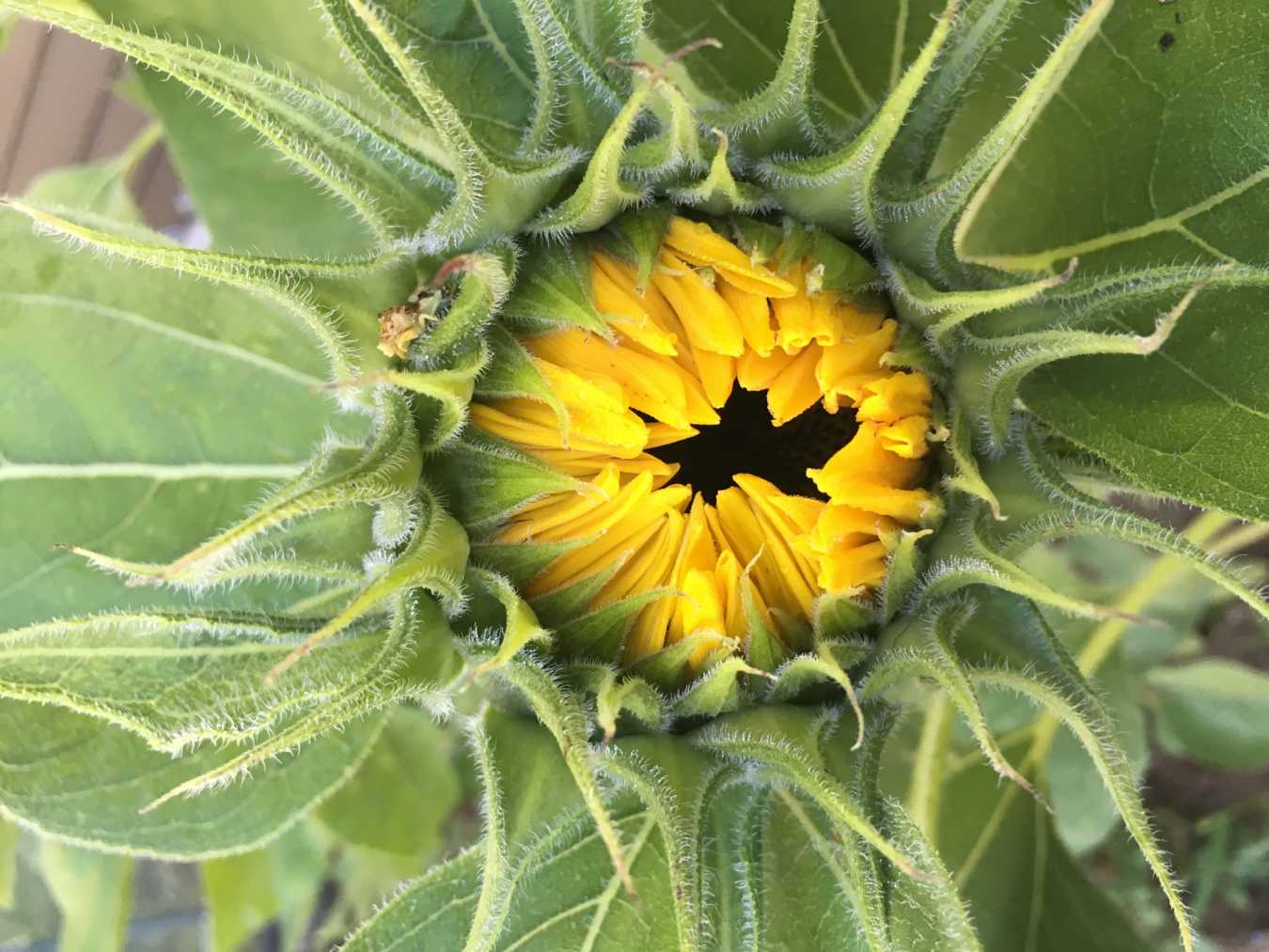 What I've Learned from Sunflowers