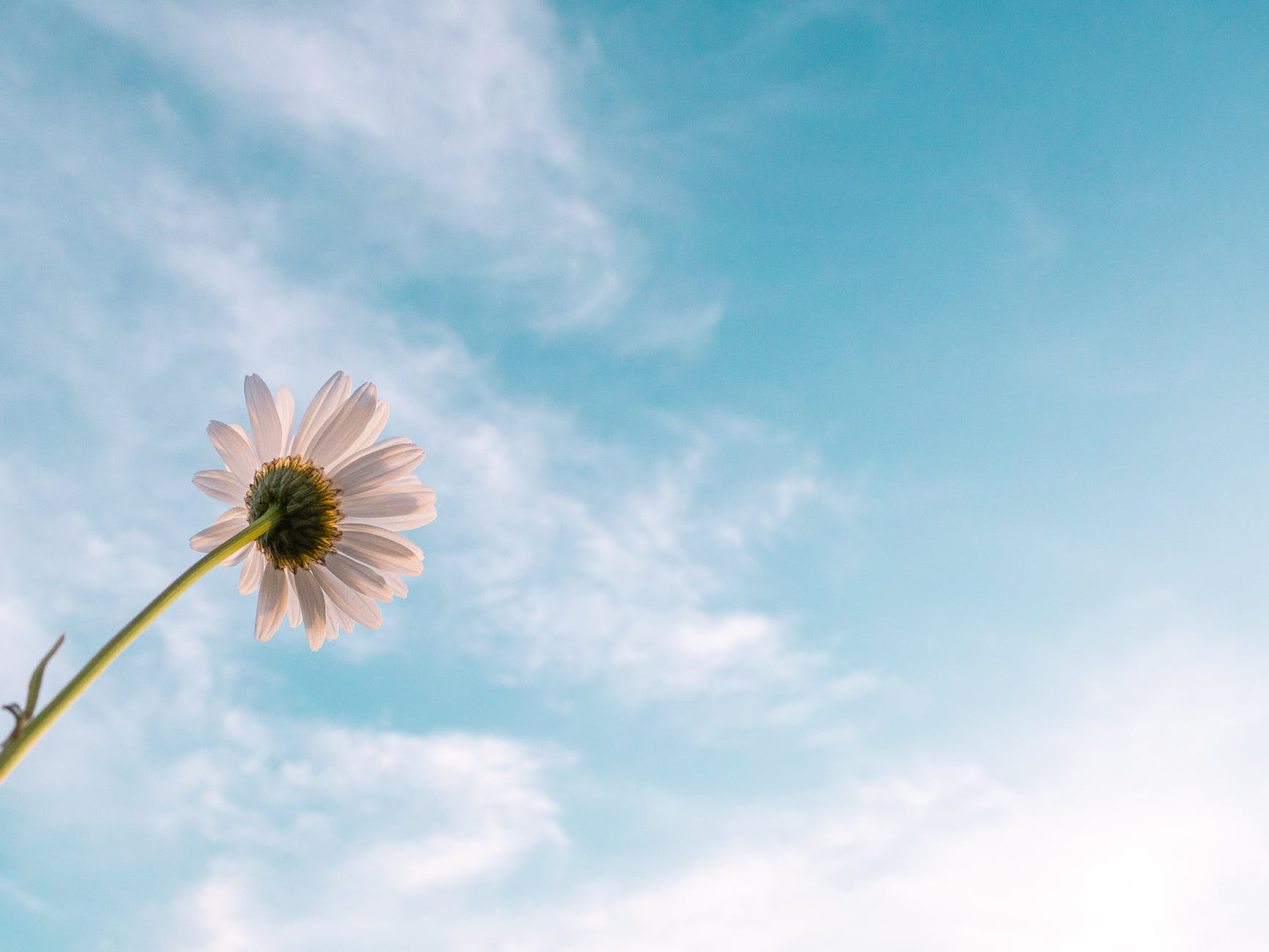 Loss and Hope – an Ascension Sunday reflection